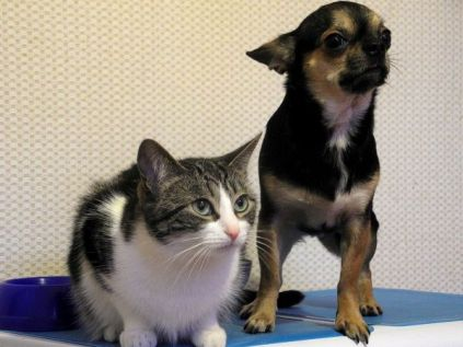 pets-975023_1920-1486981515-6621